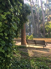 En Parque Abelardo Sánchez (Albacete) (MarisaTárraga) Tags: españa spain albacete parqueabelardosanchez arbol tree naturaleza nature verde green iphone6s hoja ngc