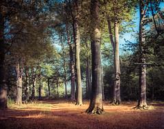 Take your positions (Ingeborg Ruyken) Tags: 2018 autumn october woods berlicum fall flickr herfst ochtend morning wamberg tree forest oktober natuurfotografie 500pxs instagram shertogenbosch bos