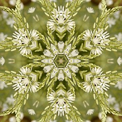 Kaleido Abstract 1910 (Lostash) Tags: art photography edited abstract kaleidoscopes patterns shapes symmetry