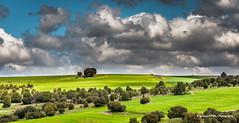 Green field (Ignacio Ferre) Tags: campo field españa spain segovia nikon paisaje landscape verde green