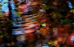 sapporo 656 (kaifudo) Tags: sapporo hokkaido japan botanicalgarden autumn autumncolors reflection 秋 札幌 札幌市 北海道 北大植物園 nikon d5 nikkor afs 70200mmf28gedvrii 70200mm kaifudo