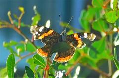 Winter Sun = Butterfly (cami.carvalho) Tags: winter sun butterfly inverno sol borboleta luz light