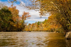 Fall on the Haw (cwhitted) Tags: northcarolina unitedstates us bynum hawriver fall autumn river lowerhawriverstatenaturalarea lowerhawriverstatenaturalareatrail chathamcounty sonyalpha sony sonya7iii sonyalpha7iii a7iii canonef50mmf18 canonef50mmf18stm sigmamc11