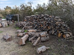 Woodpile (Kelson) Tags: logs firewood woodpile wheelbarrows trees california madronamarsh torrance hike southbay