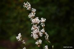 Primavera / Spring (pepelara56) Tags: flores flowers bokeh
