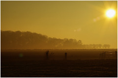 Onderdendam (Schnarp) Tags: onderdendam mist diezig dook fog zon sonne sun soleil natuur nature natur bomen trees baume arbres hdr henrirengers edited bewerkt nederland netherlands holland niederlande paysbas europa europe pentaxk10d