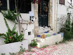 Cats' paradise (pefkosmad) Tags: rhodes rodos rhodesoldtown rhodestown backstreets holiday vacation vacances exploring cats feralcats greece greekislands griechenland dodecanese town steps door