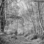 Autumn in Black and White thumbnail