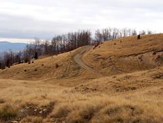 ösvény / path (debreczeniemoke) Tags: ősz autumn túra hiking hegy mountain gutin erdély transilvania transylvania táj land tájkép landscape ösvény path olympusem5