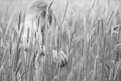 Im Kornfeld (NEVEZ P★) Tags: nevezphotography 50mm canon model dof berlin germany portrait fineart art childhood film hand kindheit blackandwhite bnw bw sw bokeh light contrast nature summer people field feld focus