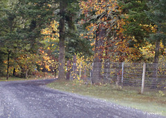 Riverwood Autumn (Joan Gray) Tags: oregon santiamcanyon willamettevalley autumn psfilter