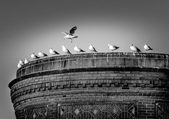 Move Over (Neil Cornwall) Tags: 2019 canada detroitriver internationalborder january usa windsor water birds sky seagulls