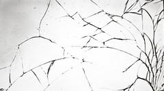 mm damaged glass (Jose RL) Tags: macro macromonday macromondays damagedglass damaged glass screen