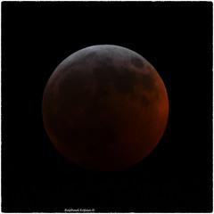 Supper Wolf Blood Moon 1/21/19 (RKop) Tags: cincinnati raphaelkopanphotography astronomy moon eclipse nikon