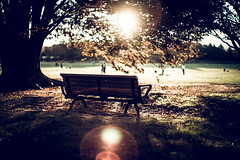 everytime we say goodbye (N.sino) Tags: m9 summilux50mm bench showakinenpark dusk sunset wood leaves ベンチ 夕日 フレア 昭和記念公園