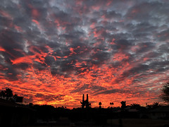 Warmth of the Sun (oybay©) Tags: arizona sunset monsoon cloudy clouds saguaro cactus silhouette color colors nature natural orange yellow red purple outdoor sky dusk cloud city tree grass