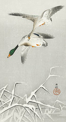 Two wild ducks in flight (1900 - 1936) by Ohara Koson (1877-1945). Original from The Rijksmuseum. Digitally enhanced by rawpixel. (Free Public Domain Illustrations by rawpixel) Tags: pdproject21batch2x otherkeywords tagcc0 animal antique art asian bird drawing ducks illustration japan japanese koson museum name ohara oharakoson old paint rijksmuseum vintage wildducks