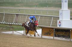 "2018-11-30 (21) r7 Adrian Flores on #2 Sarah's Treasure for the win (JLeeFleenor) Tags: photos photography md marylandhorseracing maryland marylandracing laurelpark jockey جُوكِي ""赛马骑师"" jinete ""競馬騎手"" dżokej jocheu คนขี่ม้าแข่ง jóquei žokej kilparatsastaja rennreiter fantino ""경마 기수"" жокей jokey người horses thoroughbreds equine equestrian cheval cavalo cavallo cavall caballo pferd paard perd hevonen hest hestur cal kon konj beygir capall ceffyl cuddy yarraman faras alogo soos kuda uma pfeerd koin حصان кон 马 häst άλογο סוס घोड़ा 馬 koń лошадь outdoors outside"