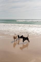 Port Willunga (Helen C Photography) Tags: yellow beach ocean waves shore nature south australia coast willunga nikond750 nikon d750 dogs