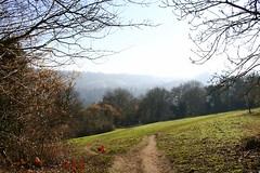 Coming Down The Hill (crashcalloway) Tags: alexandrapark field bath somerset avon avonandsomerset westcountry trees nature landscape landscapephotography