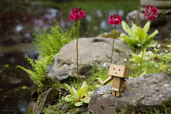 Danbo (mikoburaphotography) Tags: danbo toyphotography toy figure
