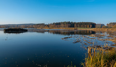 Teichgebiet Wolche  (7) (berndtolksdorf1) Tags: deutschland thüringen wolche teichgebiet teich wasser baüme steg insel wald outdoor