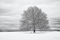 The white Tree II... (Ody on the mount) Tags: anlässe bäume em5ii fototour himmel mzuiko1250 omd olympus pflanzen rahmen schnee schneeschuhtour schwäbischealb solitär wald winter wolken bw clouds frame monochrome sw sky trees metzingen badenwürttemberg deutschland de