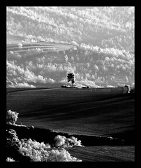 B/N (Cal Centelles) Tags: gebrada frozen bn bosc woods winter cold