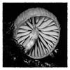 Oudemansiella Mucida (Mark Wasteney) Tags: macromondays centersquarebw blackwhite squareformat photoborder bw fungus closeup macro
