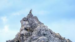 Eagle rock (geemuses) Tags: whitebelliedseaeagle eagle birdofprey seabird ornithology ornithologist birdwatcher camelrock bermagui nsw newsouthwales nature wildlife canon camera lens70mm300mmlens sky blue australia birds