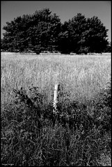 Noyen sur Sarthe (Sarthe) (gondardphilippe) Tags: noyensursarthe sarthe maine paysdelaloire noiretblanc noir nb blanc blackandwhite bw black white arbres campagne champ extérieur field graphique herbes haie sky landscape monochrome nature outdoor ombre paysage quiet rural ruralité texture symétrie zen