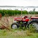 Massey Ferguson tractor, The Scilly Isles, UK