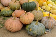 Pai Local Market (sillie_R) Tags: food market pai pumpkin thailand vegetable village maehongson th