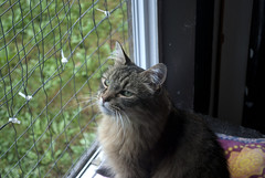 Timmie - 10 year old spayed female