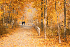Autumn Stroll (A Great Capture) Tags: donvalley foliage yellow walk couple urban nature toronto trees path autumn fall trail evergreenbrickworks agreatcapture agc wwwagreatcapturecom adjm ash2276 ashleylduffus ald mobilejay jamesmitchell on ontario canada canadian photographer northamerica automne herbst 2018 torontoexplore