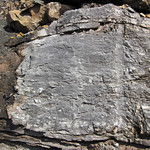Limestone (Mill Knob Member, Slade Formation, Upper Mississippian; Clack Mountain Road Outcrop, south of Morehead, Kentucky, USA) 12 thumbnail