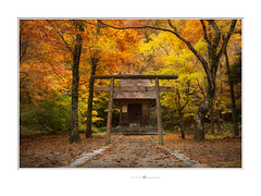 Momijigari (紅葉狩) (paolo paccagnella) Tags: phpph© japan momijigari autumn 2018 trees yellowleaves flickr foto flowers photo primephoto territorio ambiente colors shirakawago yahoo:yourpictures=art