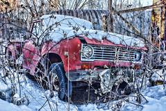 Winter Settles In (Dave Linscheid) Tags: truck ih internationalharvestor winter snow decay weed burdock butterfield watonwancounty mn minnesota usa topazadjust