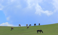 Grazing with the Clouds. And Friends. (Eye of Brice Retailleau) Tags: angle beauty composition landscape nature outdoor paysage perspective scenery scenic view extérieur cloud clouds cloudy cloudscape nuages backback backpacking travel traveling sky skyscape outside outdoors roadtrip ciel panorama light montagne montagnes mountain mountains hill hills green grass herbe vert verte fauna faune cheval chevaux horse horses countryside campagne central asia asie centrale kyrgyzstan kyrgyz song kul kol silk road