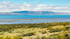 "Lago Argentino-0404 (kasiahalka) Tags: argentina argentinalake glacier hotel ice icefield iceberg kostenaikehotel lagoargentino lake losglaciaresnationalpark miradordelossuspiros nationalpark np patagonia patagoniadesert patagoniasteppe southamerica town water ""santa cruz province"" unesco worldheritagesite"