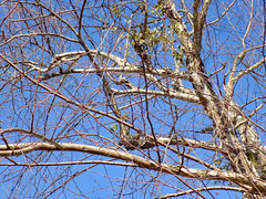 Branches And Sky. (dccradio) Tags: lumberton nc northcarolina robesoncounty outdoor outdoors outside february winter afternoon saturday saturdayafternoon goodafternoon nikon coolpix l340 bridgecamera nature natural tree trees branch branches treebranch treebranches treelimb treelimbs sky bluesky