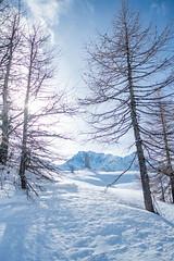 Simplonpass_26. Januar 2018-6 (silvio.burgener) Tags: simplonpass simplon switzerland adler schweiz swiss svizzera suisse hospiz sempione steinadler