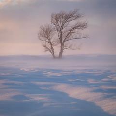DSCF6815-2.jpg (mblonde12) Tags: britannia winter