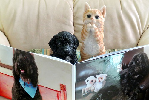 B.B. and Simon the kitten are thrilled to see Benni's book.