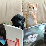 B.B. and Simon the kitten are thrilled to see Benni's book. thumbnail