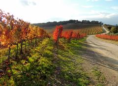 Tra Poggibonsi e Castellina in Chianti - 3 (antonella galardi) Tags: toscana siena chianti poggibonsi castellina 2018 autunno vigna vigneto wine vino serelle