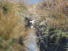 Spanien Andalusien Sierra Nevada Alpujarras @ Spain Andalusia © Acequia Andalucía La Alpujarra Granadina © (hn.) Tags: capileira acequia acequianueva spain europe andalusia andalucia spanien eu europa andalusien heiconeumeyer copyright copyrighted tp2018anda es sierranevada laalpujarra alpujarras provinciadegranada alpujarragranadina españa bewässerungskanal kanal irrigation irrigationchannel