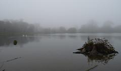 Hatfield Forest (davidvines1) Tags: hatfield forest essex lake fog trees sky