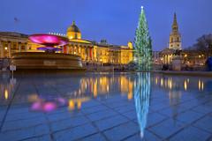 Natale Britannico / British Christmas (Trafalgar Square, London, United Kingdom)(Buon Natale!!!/Merry Christamas!!!) (AndreaPucci) Tags: trafalgarsquare london uk christmas tree 2018 andreapucci night