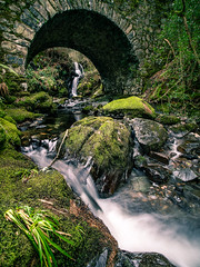 Tollymore Forest Park - United Kingdom - Landscape photography